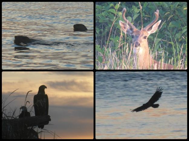 sunrise-wildlife